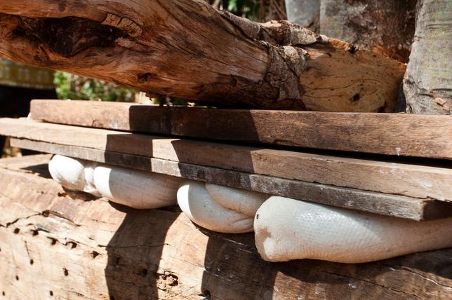 Prensagem farinha mandioca. Foto Carolina Amorim.